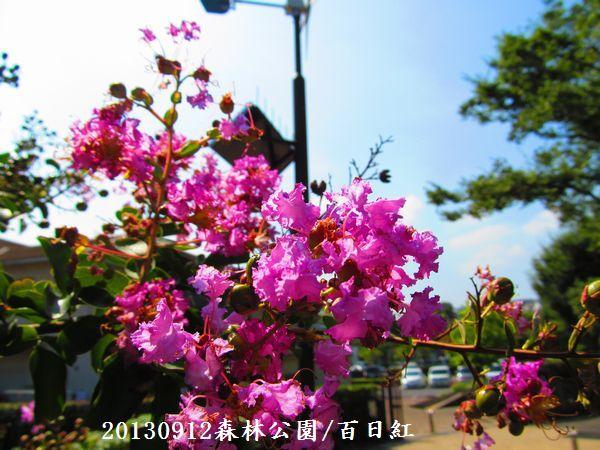 0912akihana06.jpg
