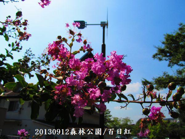 0912akihana07.jpg