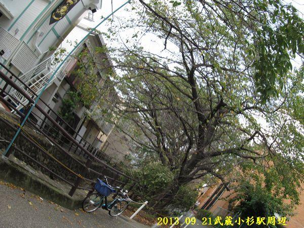 0921kosugi09.jpg