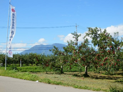 リンゴの木と霊仙寺山