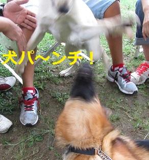 犬パンチ炸裂☆