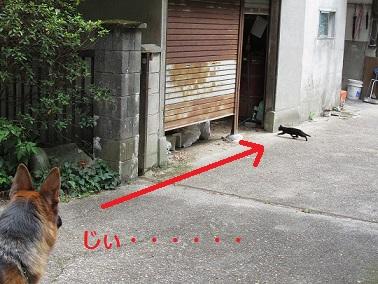 子猫発見!
