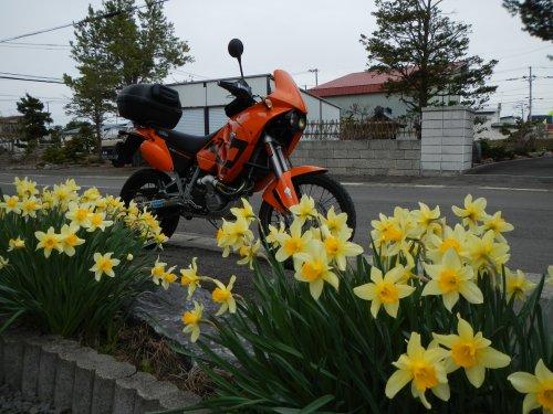 春の小樽01