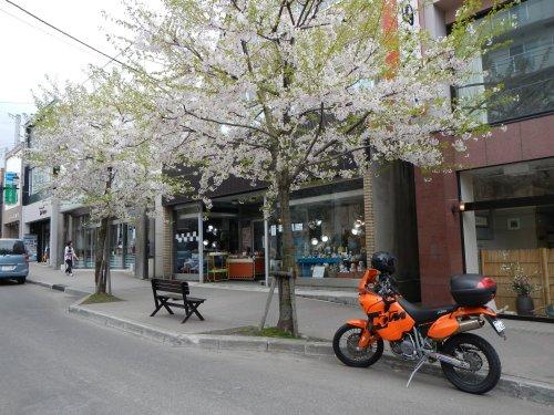 春の小樽06