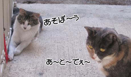 CozFluff_09262013-01.jpg