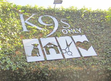 K9_Only.jpg