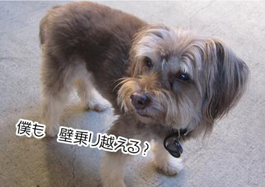Zig_10012013-01.jpg