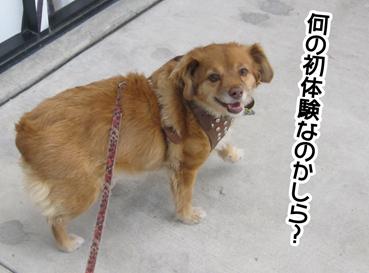 foxyB4_09012013-01.jpg