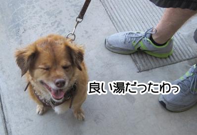 foxydone_09012013-01.jpg