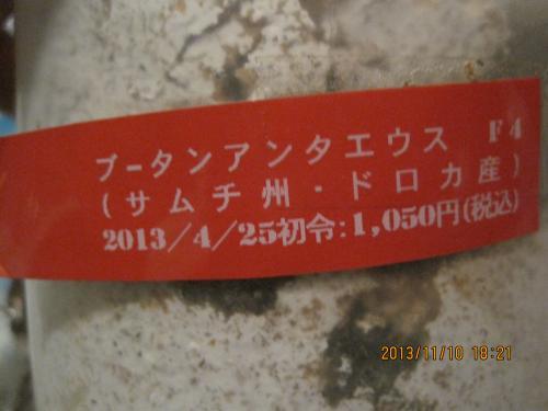 IMG_8152_ぶーたん1