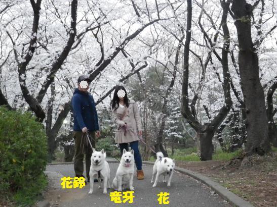 2013.3.23 三沢公園1