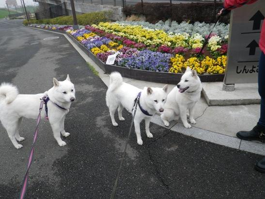 2013.3.27 新横浜公園1