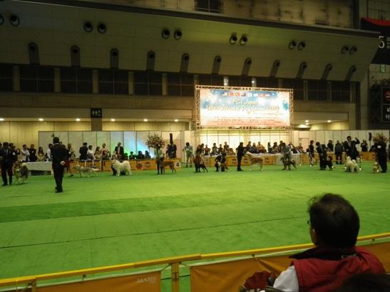 2013.4.6 JKCドッグショー1