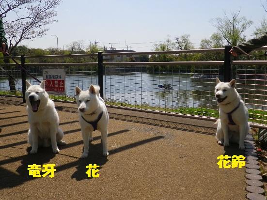 2013.4.13 守谷SA2