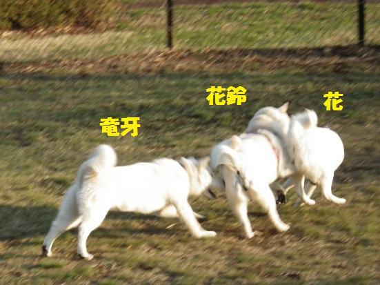 2013.4.13 那須高原SA・ドッグラン4