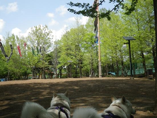 2013.4.18 こいのぼり