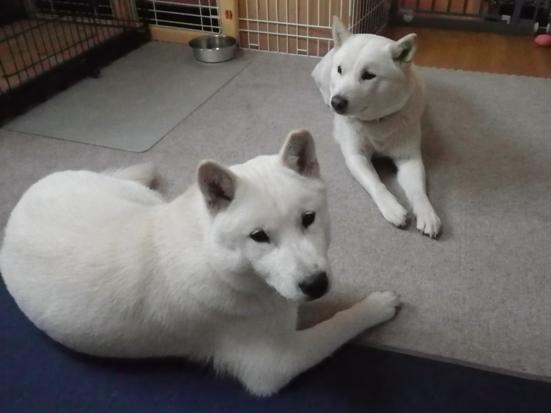 2013.4.22 花鈴&竜牙