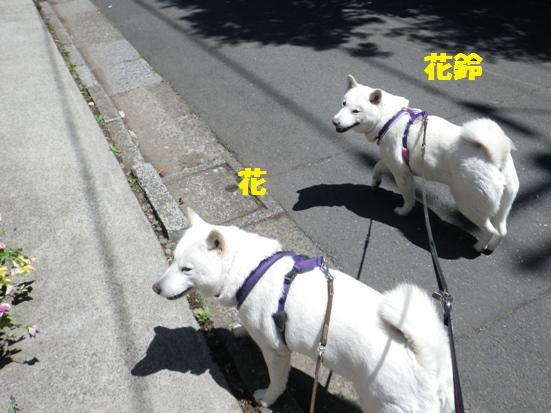 2013.5.3 花&花鈴