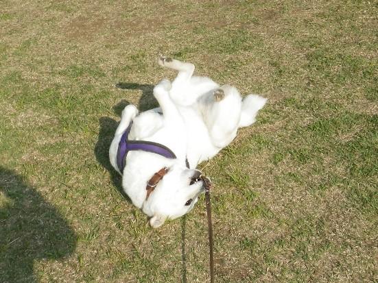 2013.5.4 所沢航空記念公園・花