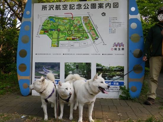 2013.5.4 所沢航空記念公園1
