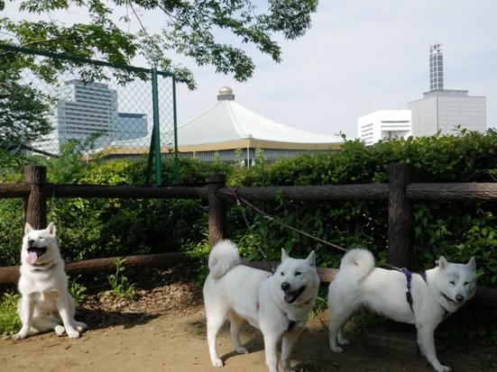 2013.5.6 北の丸公園3