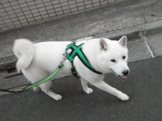 2013.5.17 散歩だ~