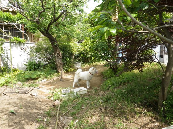 2013.5.19 五狼の庭