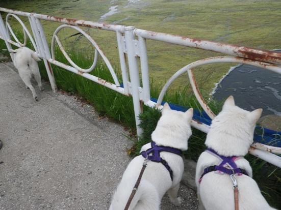 2013.5.28 大宮公園・水に入りたい1