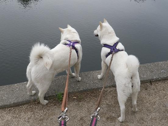 2013.5.28 大宮公園・水に入りたい2