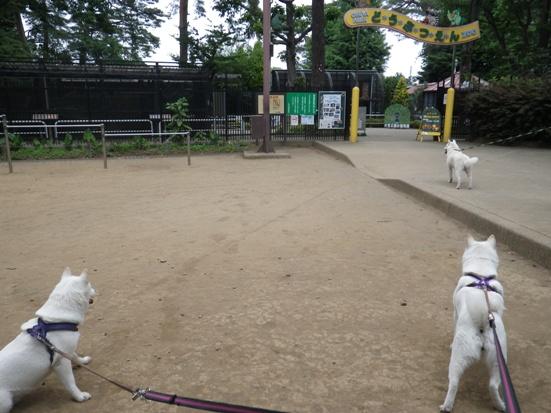2013.5.28 大宮公園・動物園2