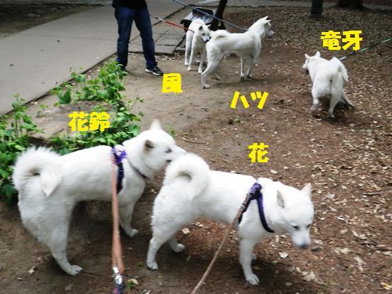 2013.5.28 大宮公園・森の中
