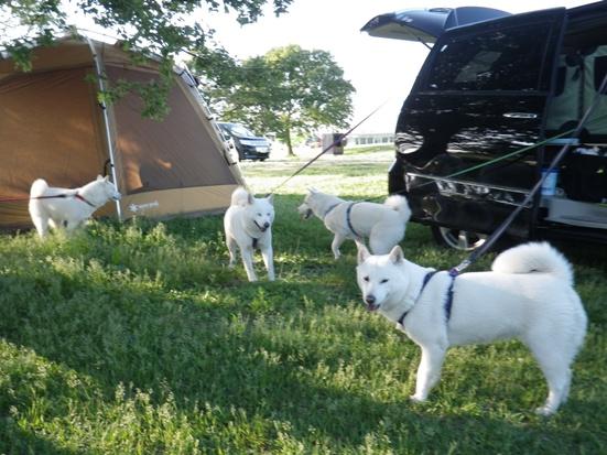 2013.6.2 北海道犬の家族