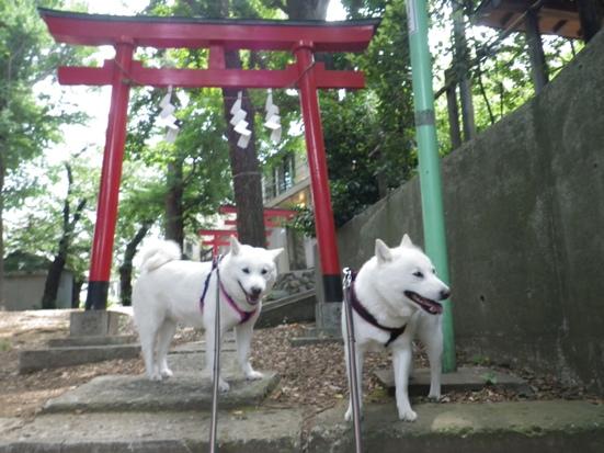 2013.6.9 神社