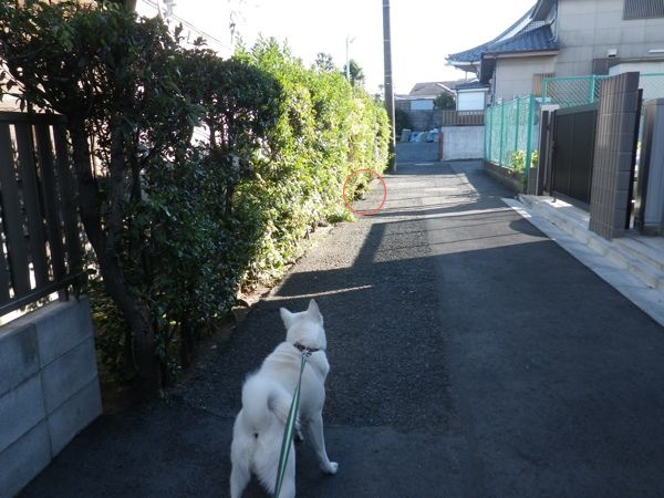 2013.11.29 竜牙1