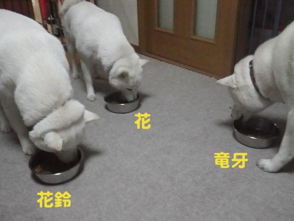 2013.12.9 食事中