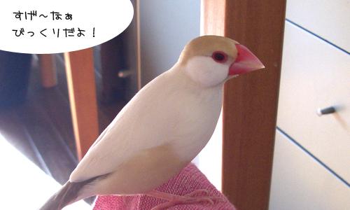 鳥関係&びっくり映像_2
