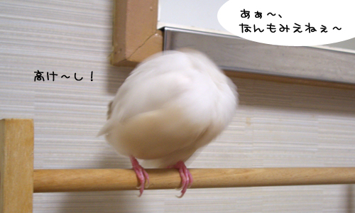鳥モチーフ_2