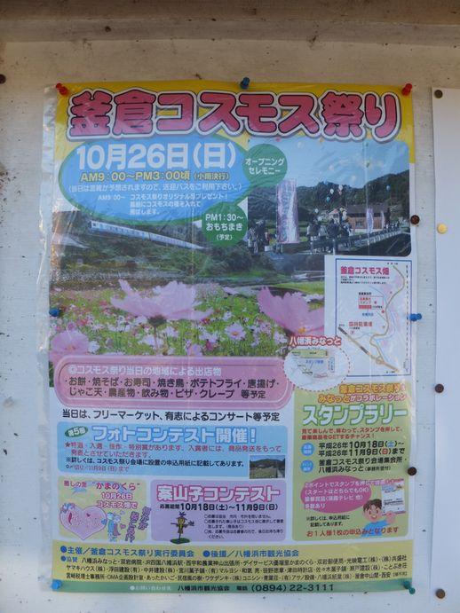 141024-11_コスモス祭り