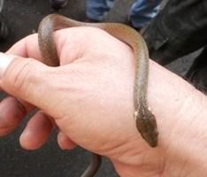 蛇9,14