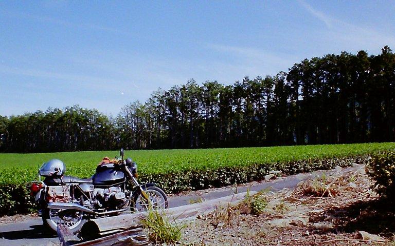 天空の茶畑-3