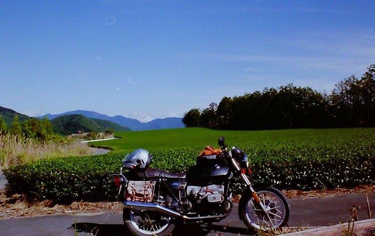 天空の茶畑-4