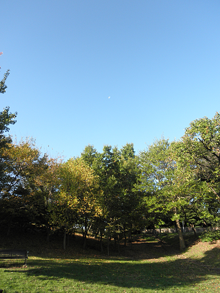 20141113景色