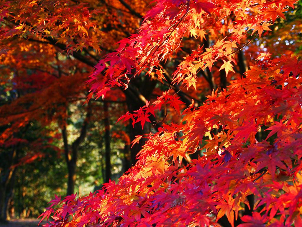 紅葉koyo_0012