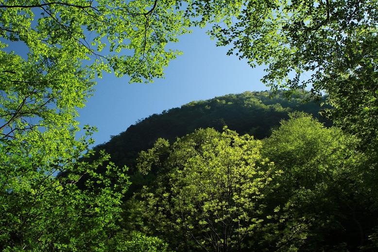 レンゲ坂谷