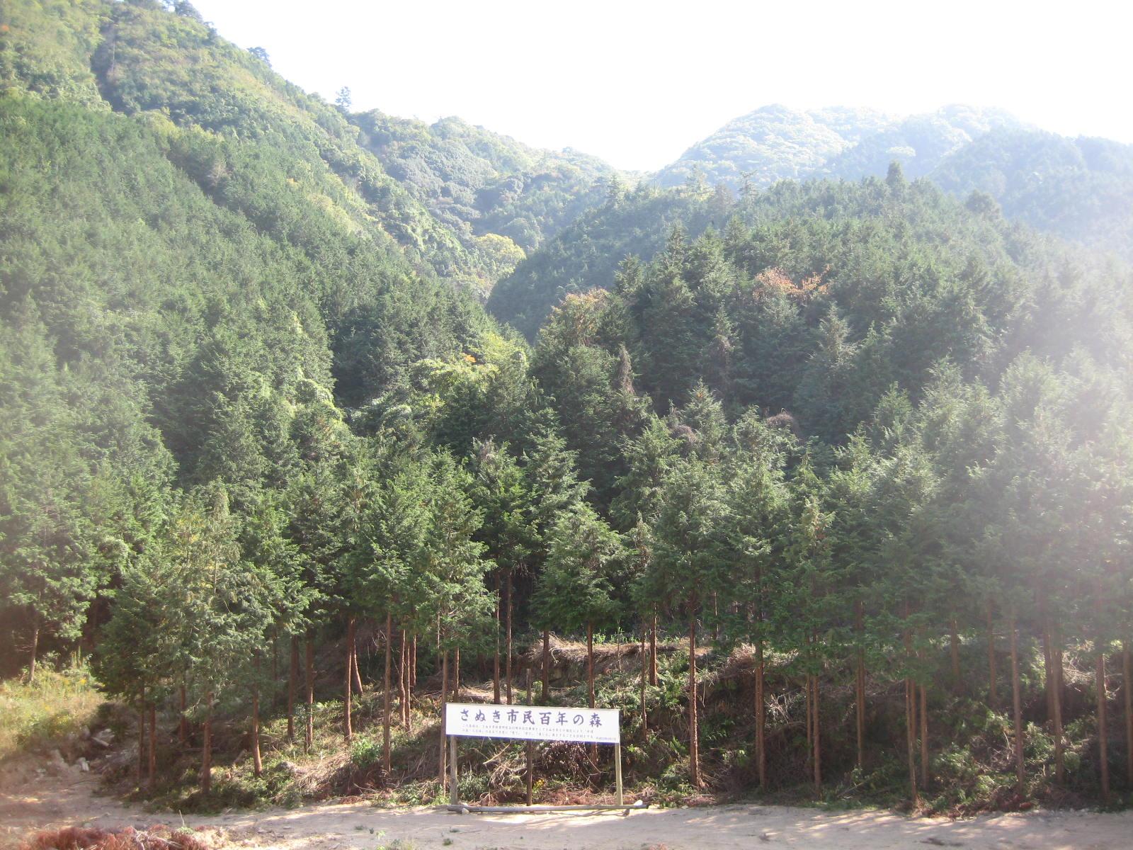 百年の森 遠景
