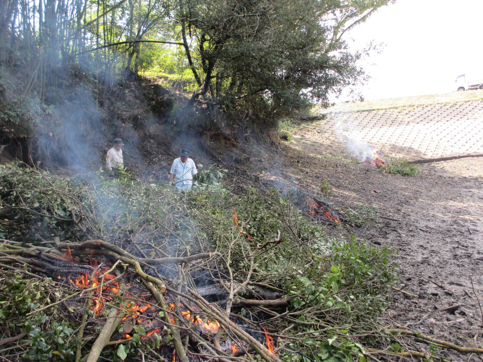 池の覆い被さっている木を伐採後焼却処分
