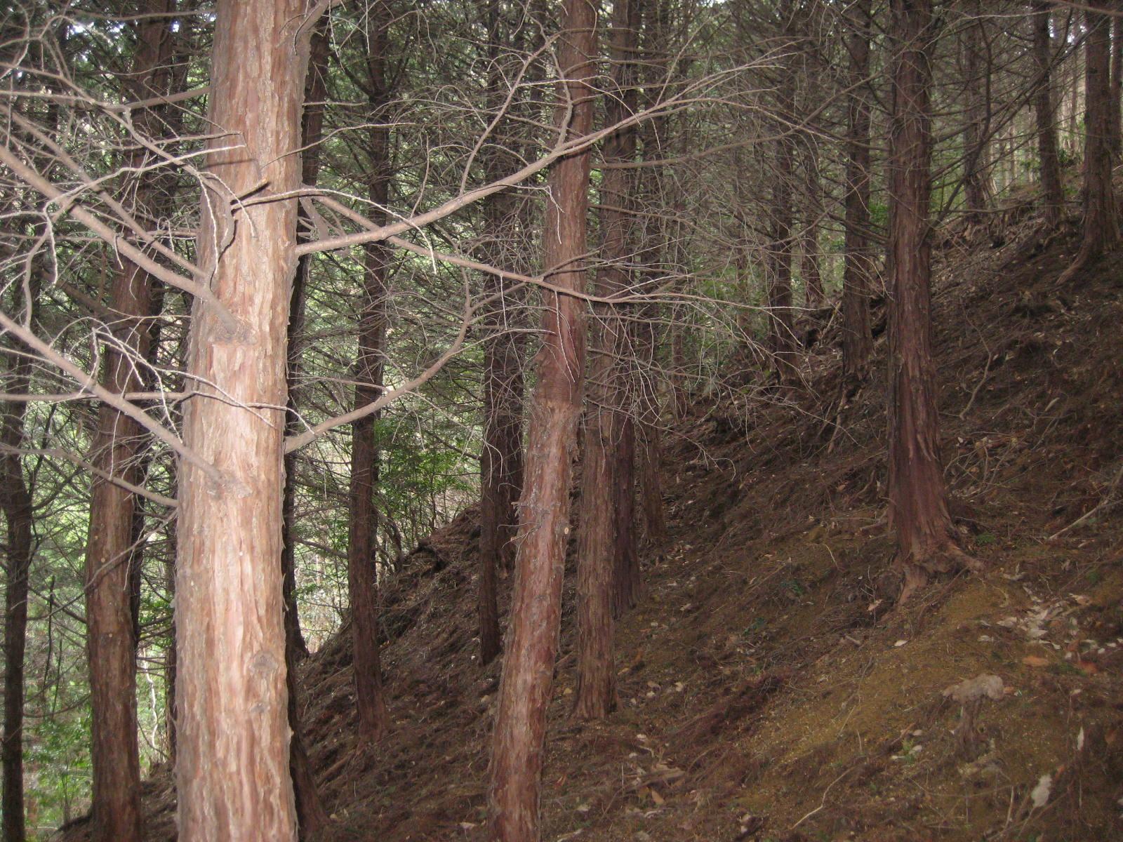 手入れ前の百年の森