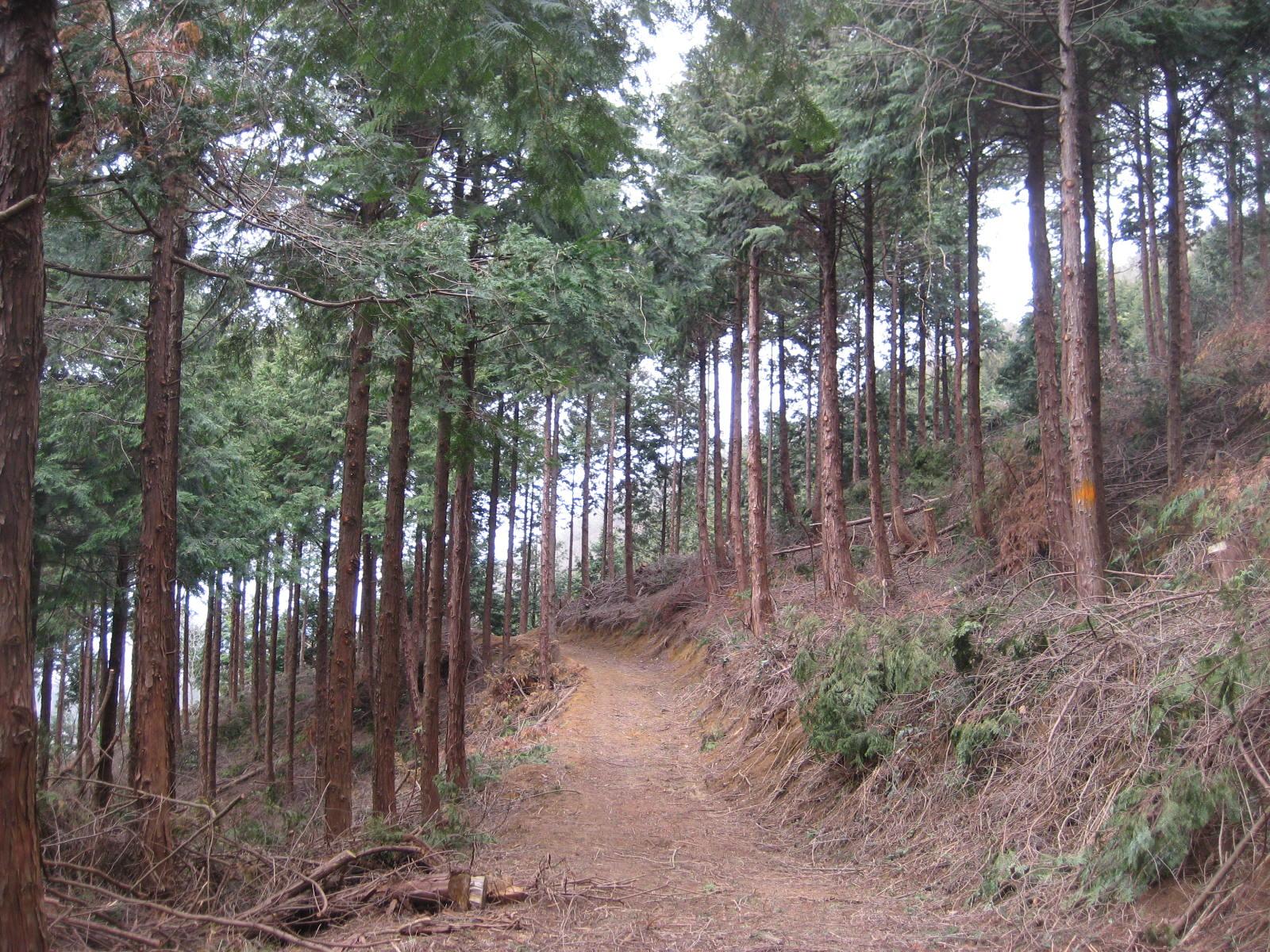 手入れ後の百年の森です。