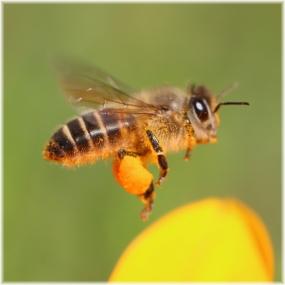 141115E 043花粉ダンゴSQ