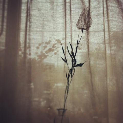 ほおづきの葉脈と笹の葉の花